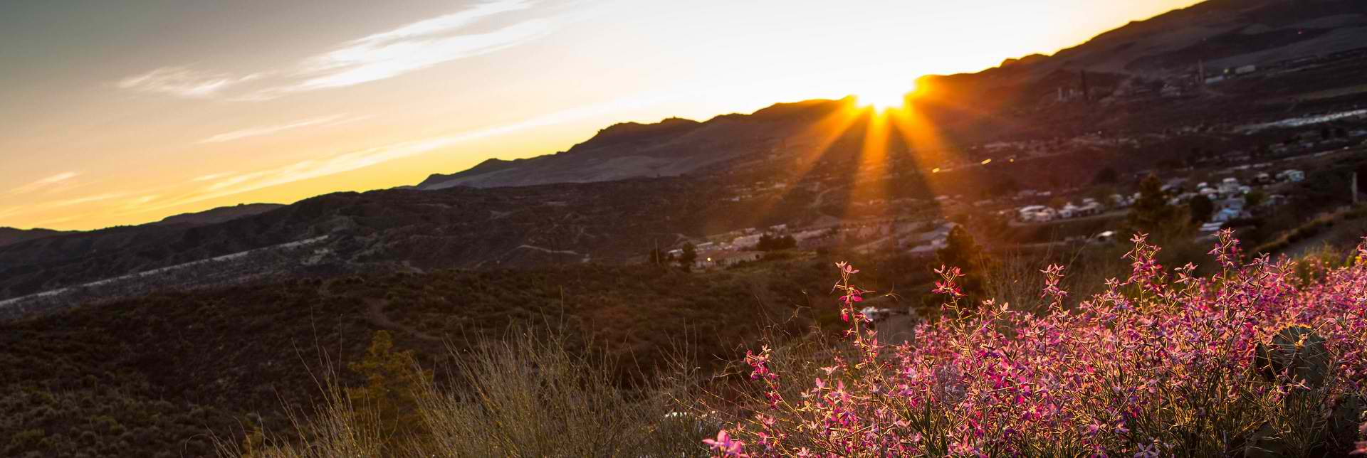 Arizona Sunset Pest Control Solutions