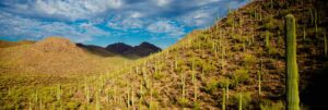 Cactus Forest Pest Control Solutions