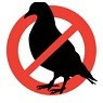 bird control services with pest control solutions Gilbert AZ